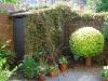 garden_summer