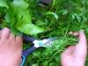 salad_gardens